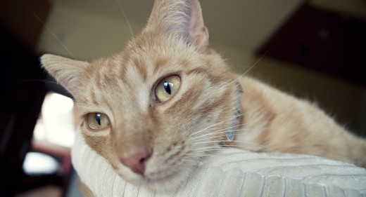 rude koty