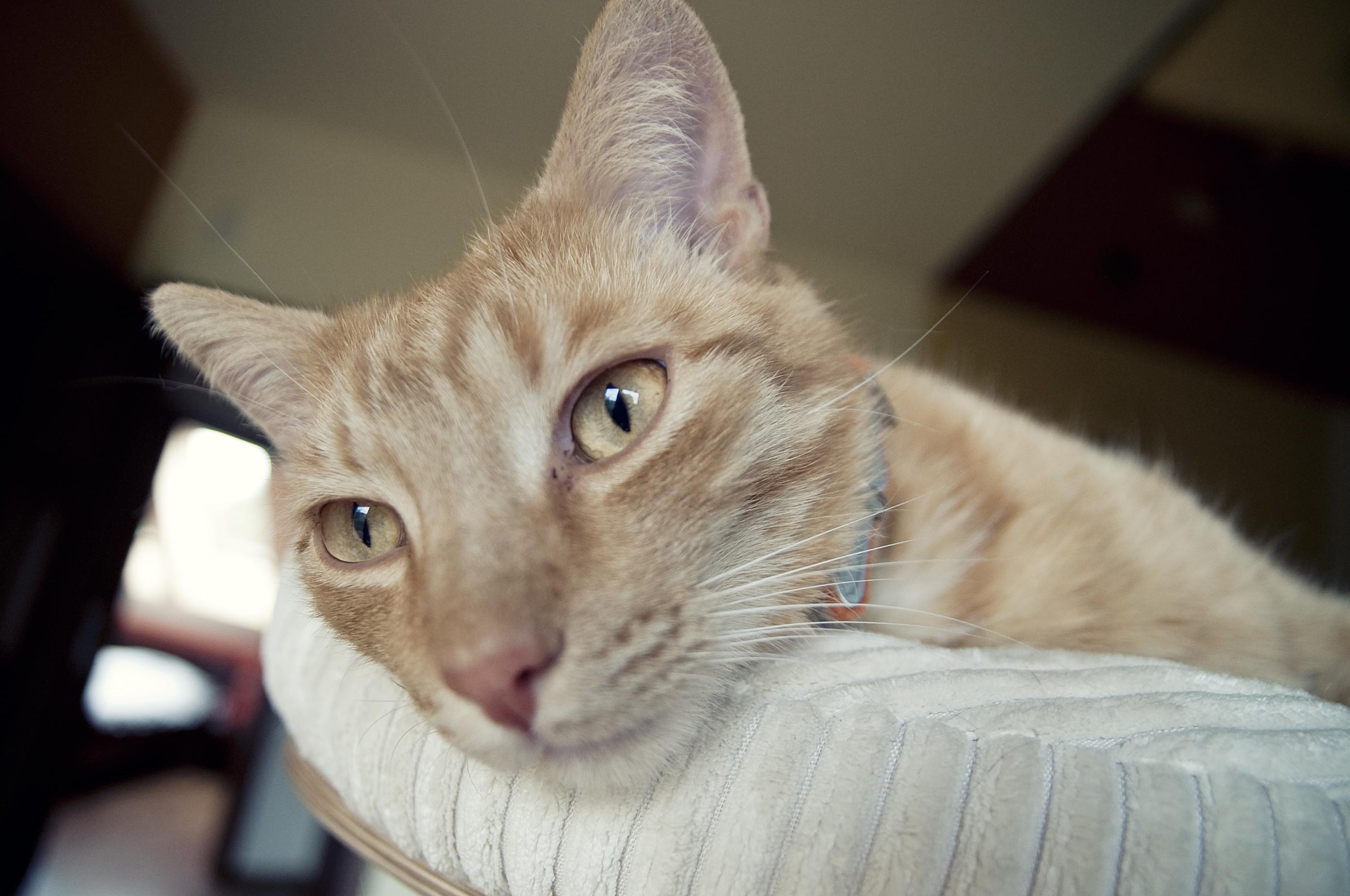Fifi i Duduś | Pets & Animals | typowy koci poranek.